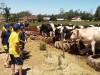 4º ano na fazenda
