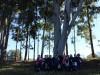 Conhecendo as árvores do Campo