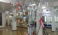 Árvore chama atenção para questão ambiental